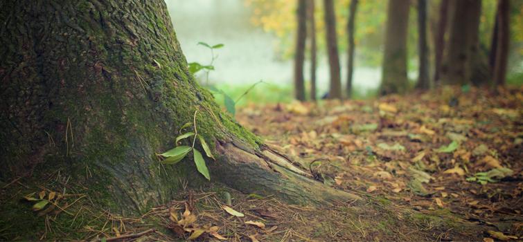 Podporujeme zodpovedné lesníctvo